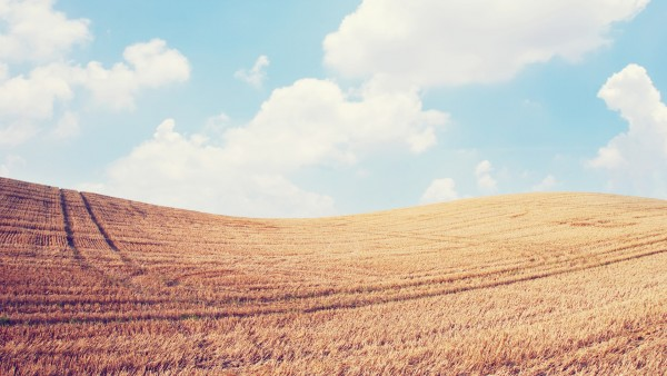 wheat-min.jpg