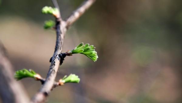 greenhope-min.jpg