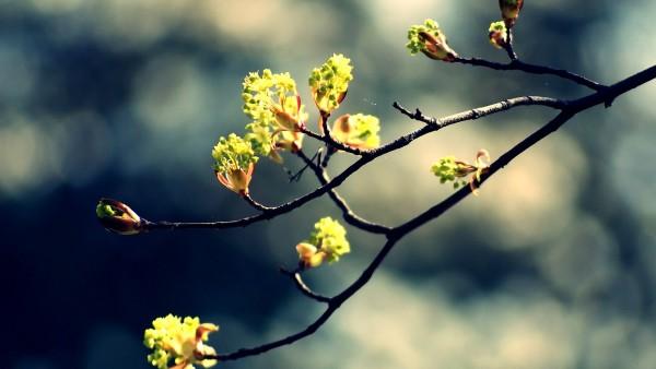 spring-min.jpg