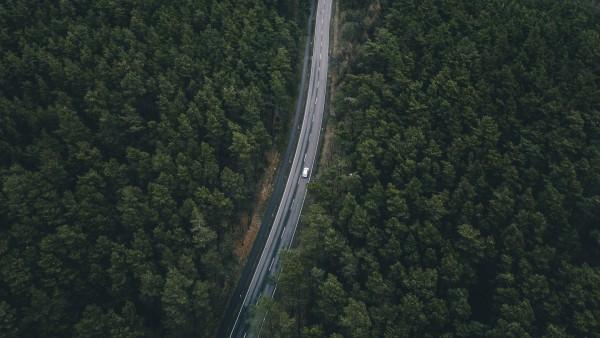 roadtrees-min.jpg