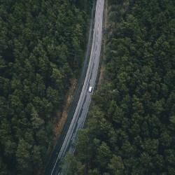 roadtrees-min